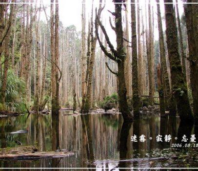 【南投 景點】忘憂森林 | 迷霧、寂靜