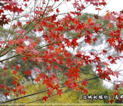 【苗栗 景點】馬那邦山 | 近城的楓紅