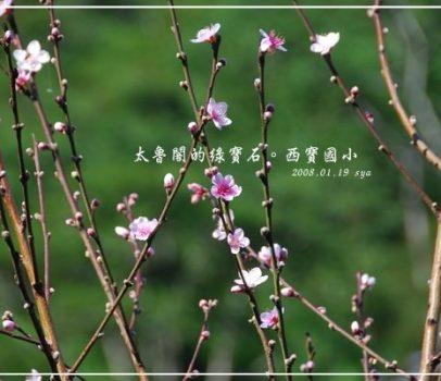 2008 FIH 花蓮之旅