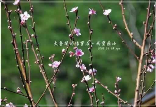 [花蓮 景點] 太魯閣的綠寶石。西寶國小