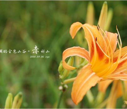 【花蓮 景點】赤科山 | 洄瀾的金色山谷