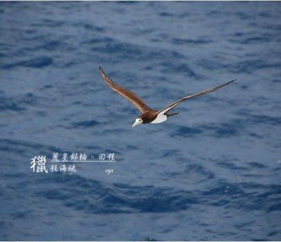 【麗星郵輪。天秤星號】回程。獵殺海鷗