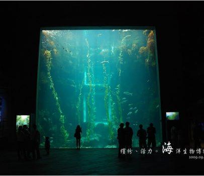 【屏東墾丁 景點】海洋生物博物館 | 欣賞藍色水底隧道、悠遊的小白鯨、大魟魚,以及夜宿海生館要注意什麼?