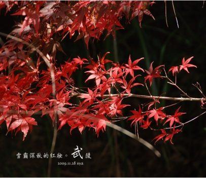 【台中 景點】武陵農場。雪霸國家公園 | 秋楓、落羽松