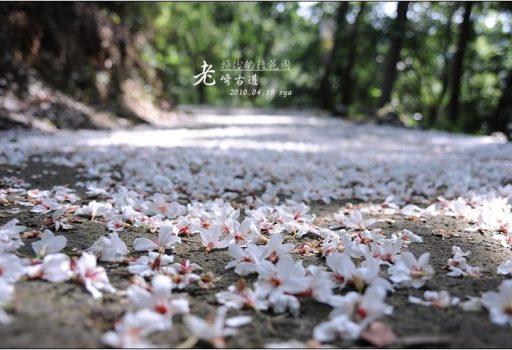 [苗栗 景點] 頭份的後花園。老崎古道