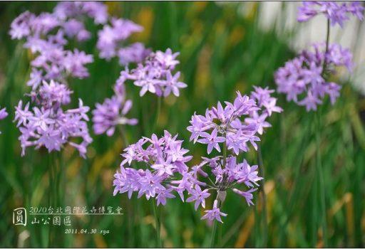 2010台北國際花卉博覽會。圓山公園區