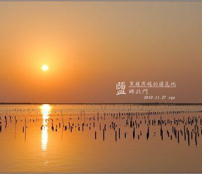 【台南 賞鳥景點】黑腹燕鷗的棲息地。鹽鄉北門 | 賞鳥季節、賞鳥地點