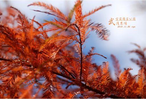 [台中 景點] 武陵農場。雪霸國家公園 (02)
