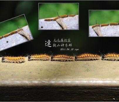 【桃園北橫 景點】拉拉山(達觀山)神木群 | 毛毛蟲的家