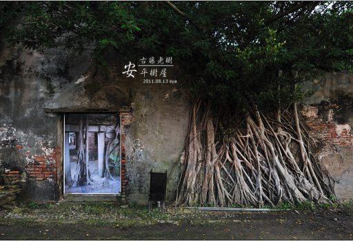 [台南 景點] 古藤老樹。安平樹屋