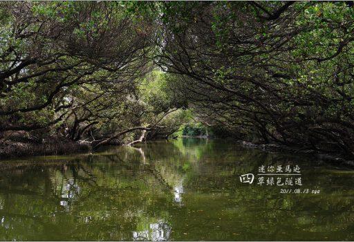 [台南 景點] 迷你亞馬遜。四草綠色隧道
