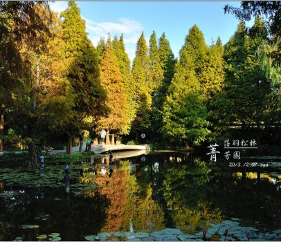 【彰化 景觀餐廳】菁芳園 落羽松林 | 歐洲般的景致