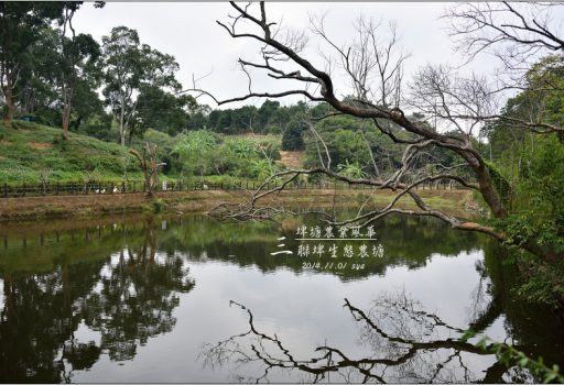 [苗栗 景點] 埤塘農業風華。北埔三連埤
