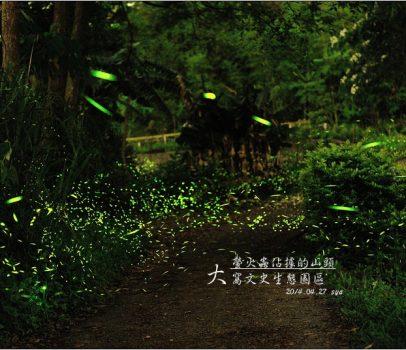 【苗栗 景點】大窩文史生態區 | 螢火蟲的追逐(5)