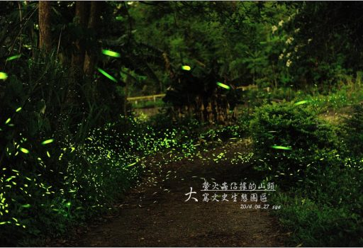 [苗栗 景點] 螢火蟲的追逐(5)。大窩文史生態區
