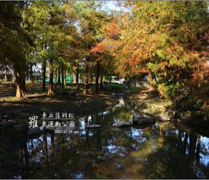 【宜蘭 景點】 羅東運動公園 | 東丘落羽松