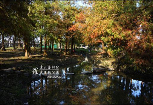 [宜蘭 景點] 羅東運動公園 | 東丘落羽松