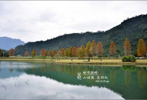 [宜蘭 景點] 員山福園 蜊埤湖畔落羽松