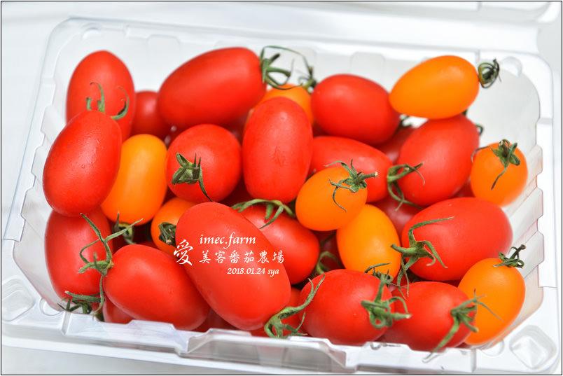 愛美客番茄農場