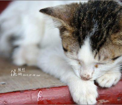 [台北 景點] 貓村。侯硐