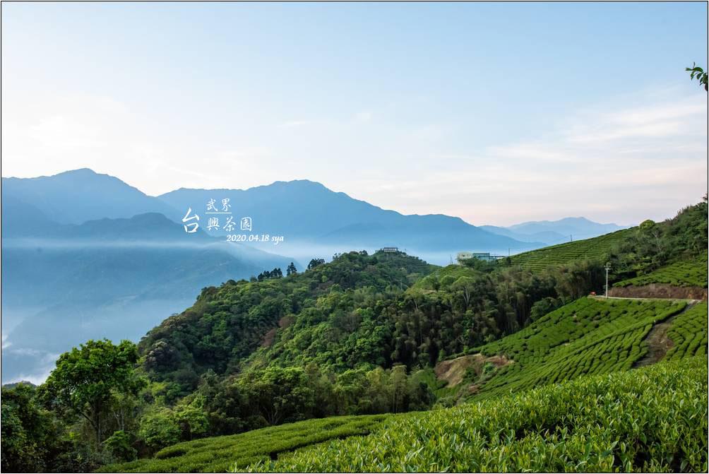武界台興茶園 | 壯闊雲海、大片的公共活動草地區