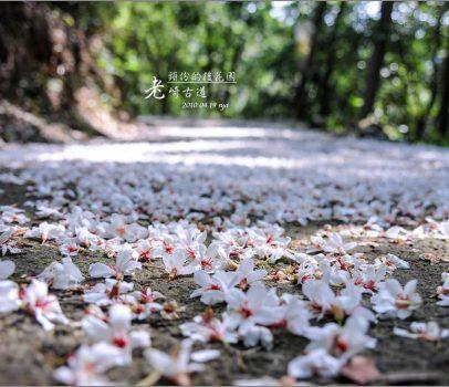 【苗栗 景點】老崎古道 | 頭份的後花園