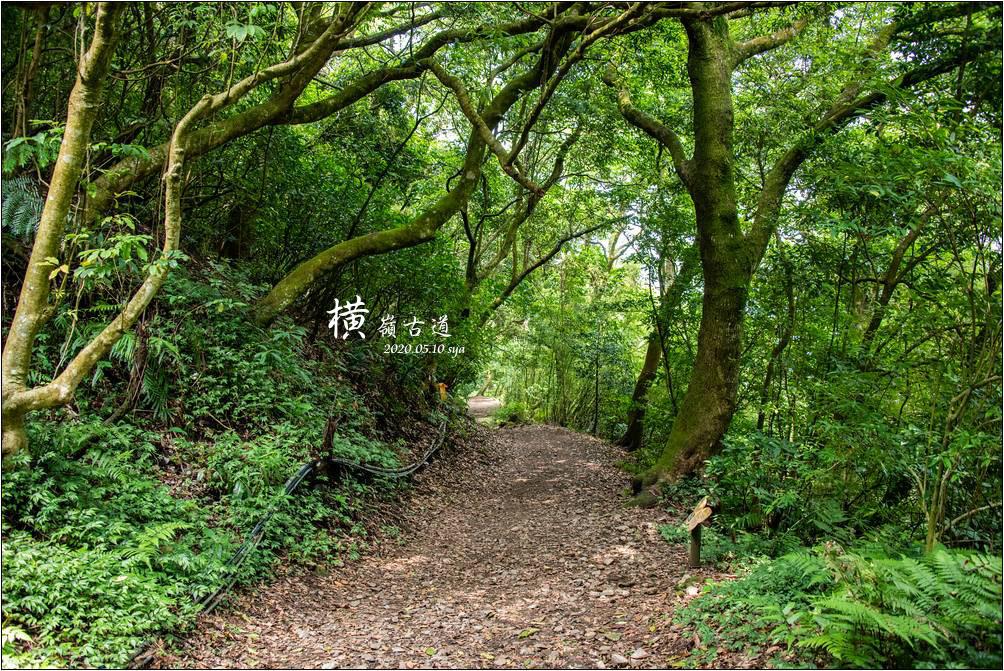 陽明山橫嶺古道 | 夏季適合親子健行、秋季私房賞楓景點