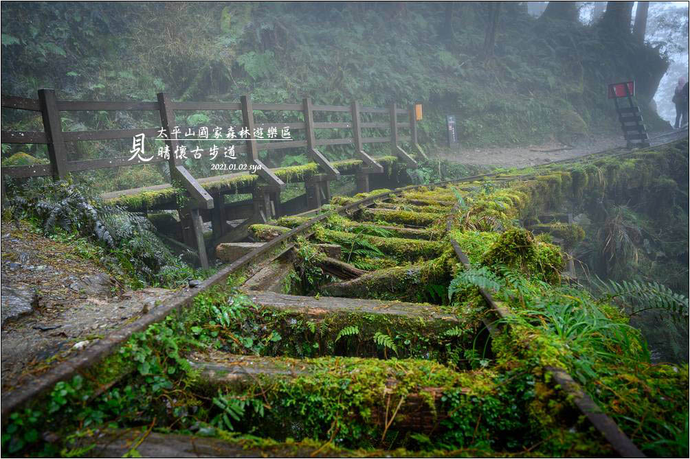 見晴懷古步道 | 太平山的幽靜之美
