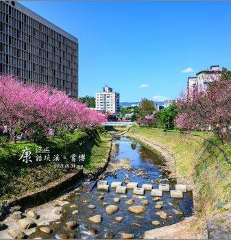 【台北 賞櫻】汐止 康誥坑溪 | 綿延溪旁的桃色粉妝