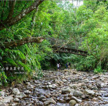 【坪林】金瓜寮魚蕨步道 | 蜿蜒於小溪旁的原始林徑