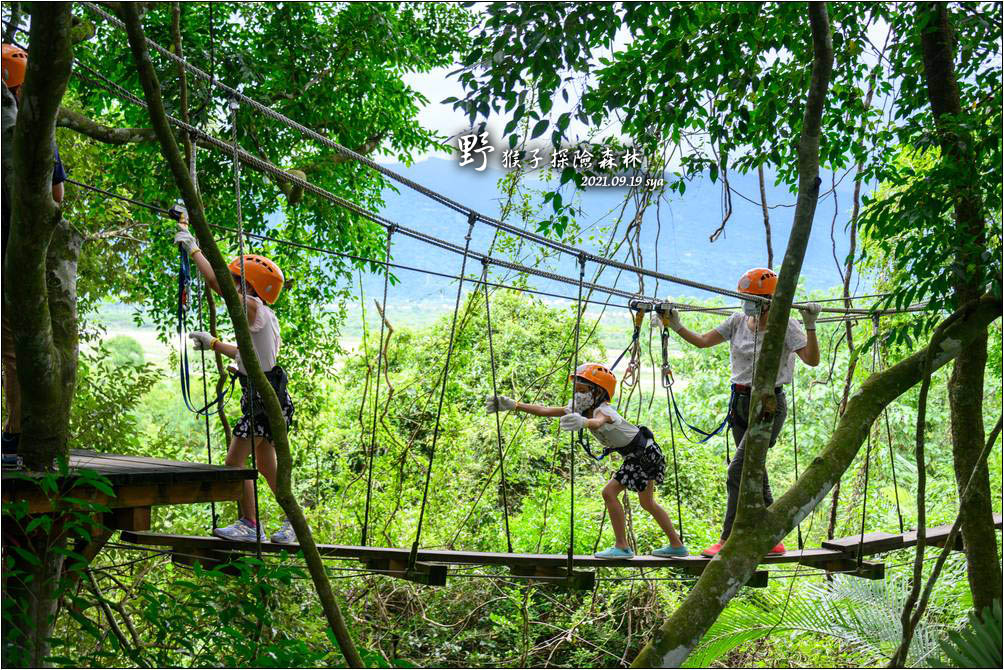 野猴子探險森林