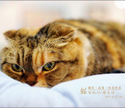 【台北 新光三越 特展】貓咪的101種生活。攝影、插畫、紙漿特展