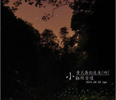 【桃園】小粗坑古道 | 螢火蟲的追逐(4)
