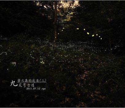 【桃園 景點】大艽芎古道 | 動人的五月雪步道,同時還可觀賞螢火蟲