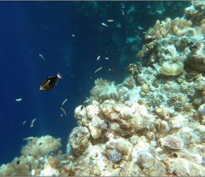帛琉外海景點2 (海底大斷層、洛克群島、野生干貝城)