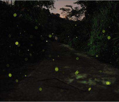 [台北 景點] 螢火蟲的追逐(2)。光明禪寺(未完成)